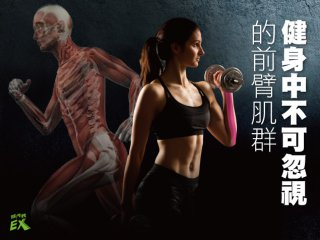 健身中不可忽視的前臂肌群